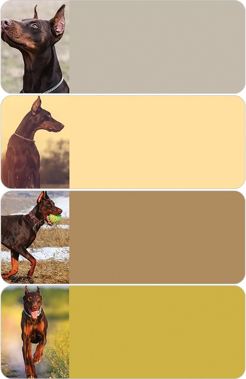 Doberman Pinscher Address Labels