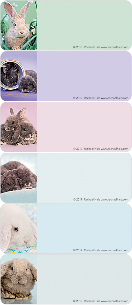 rachaelhale® Bunnies Address Labels
