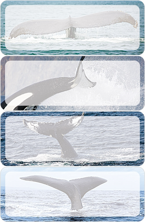 Whale Tails Address Labels