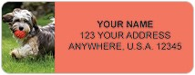 Havanese Address Labels